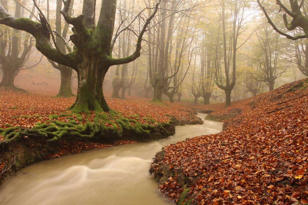 bosques-miseriosos-Otzarreta