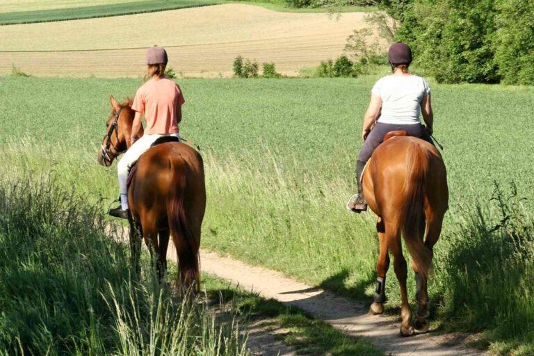 Paseos a caballo en Soria La Piñorra